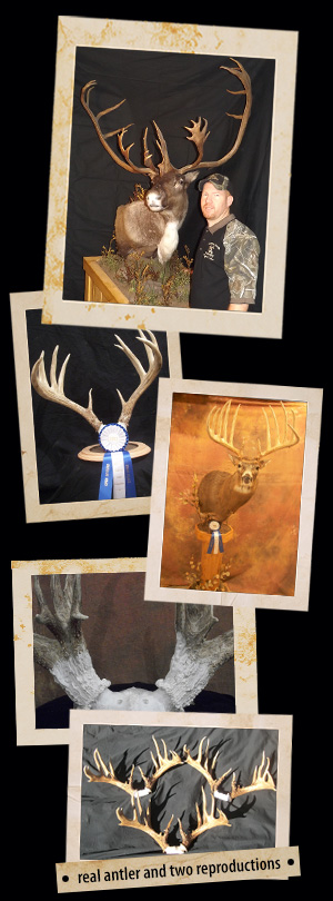 Antler Reproduction Photos